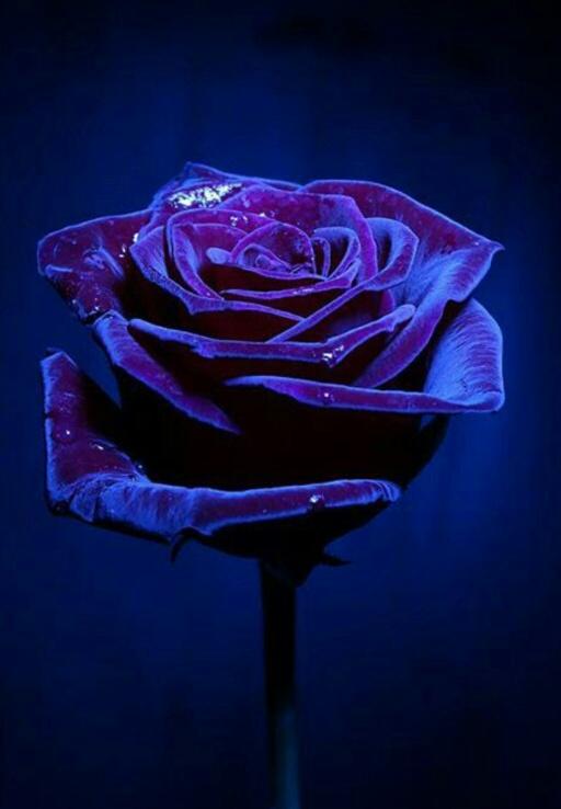 mending violet rose